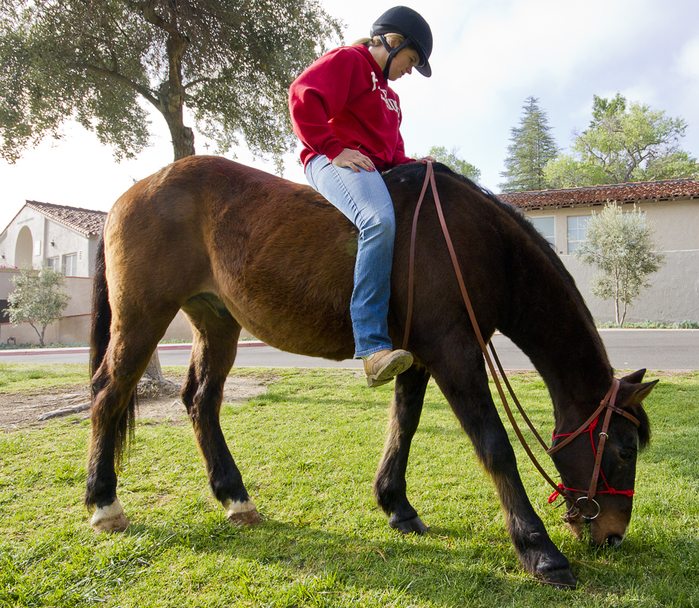 Kenna McInerny, 24, majoring in equine science walks Loblolly, a 30-year-old horse who lives at the Pierce College Equestrian Center, in Rocky Young Park at Pierce College in Woodland Hills, Calif. on March 29, 2012. The horse was brought to the Mall to advertise the upcoming Farm Walk happening at Pierce on April 22, 2012. Photo by Ava Weintraub