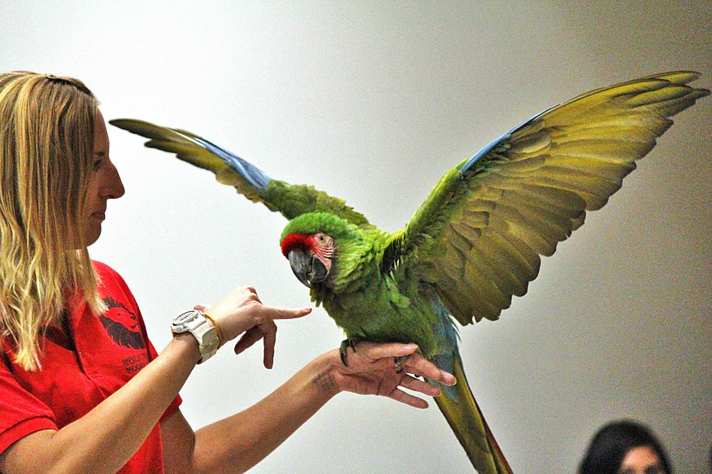 Candace Shelton, of the Exotic and Animal Training and Management Program at Moorpark College, with a military macaw in front of an audience that included middle and high school students and all the presidents from the Los Angeles Community College District in the Center for Sciences at Pierce College in Woodland Hills, Calif. on November 4, 2011. Photo: Javier Zazueta.