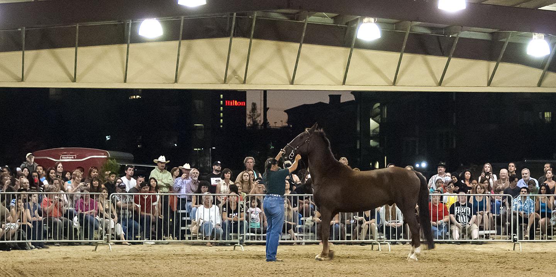 Parade of Breeds showcases Equestrian Center