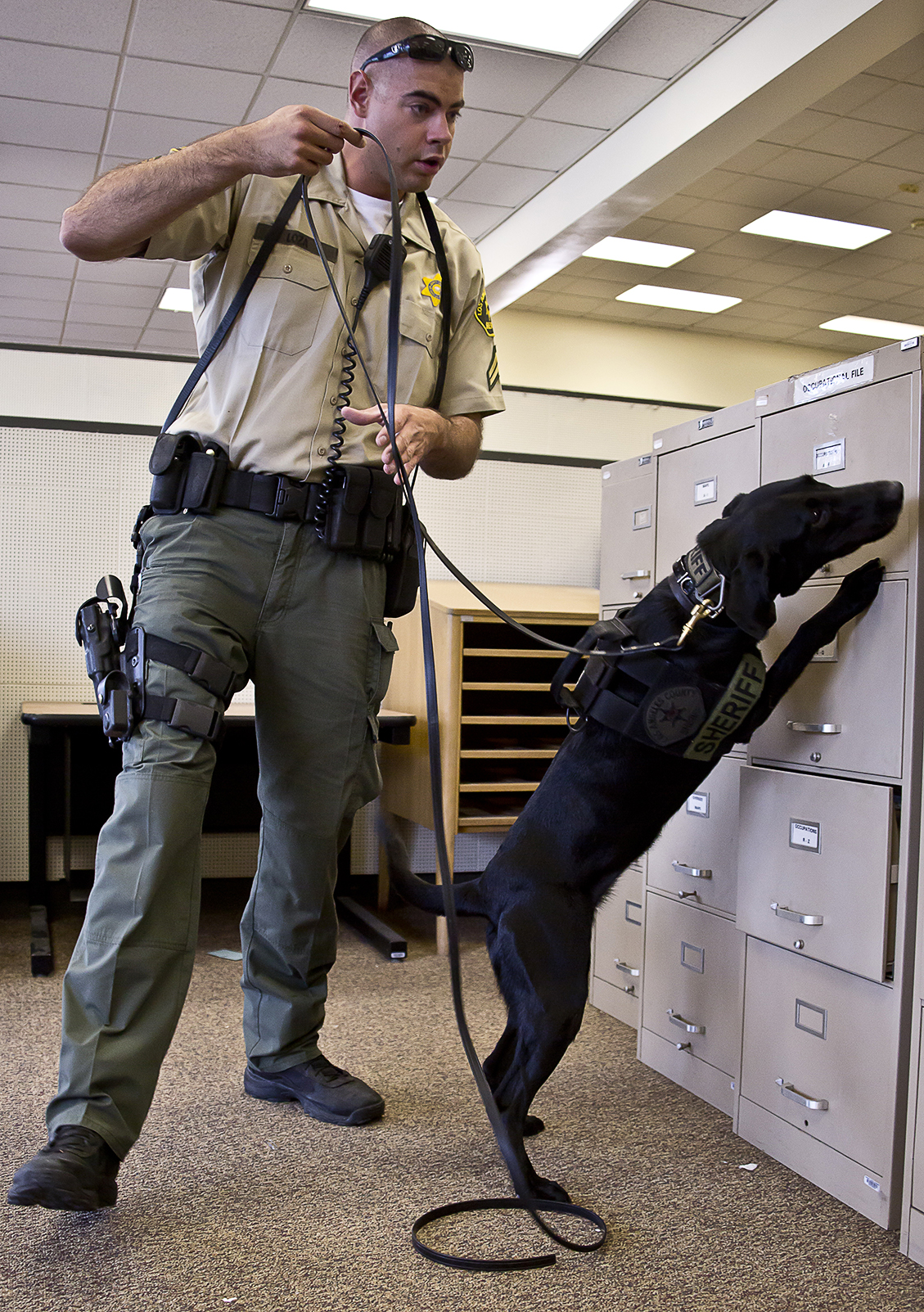 PHOTO SLIDESHOW: LA County Sheriff's Department officers train drug- and bomb-sniffing dogs in old library