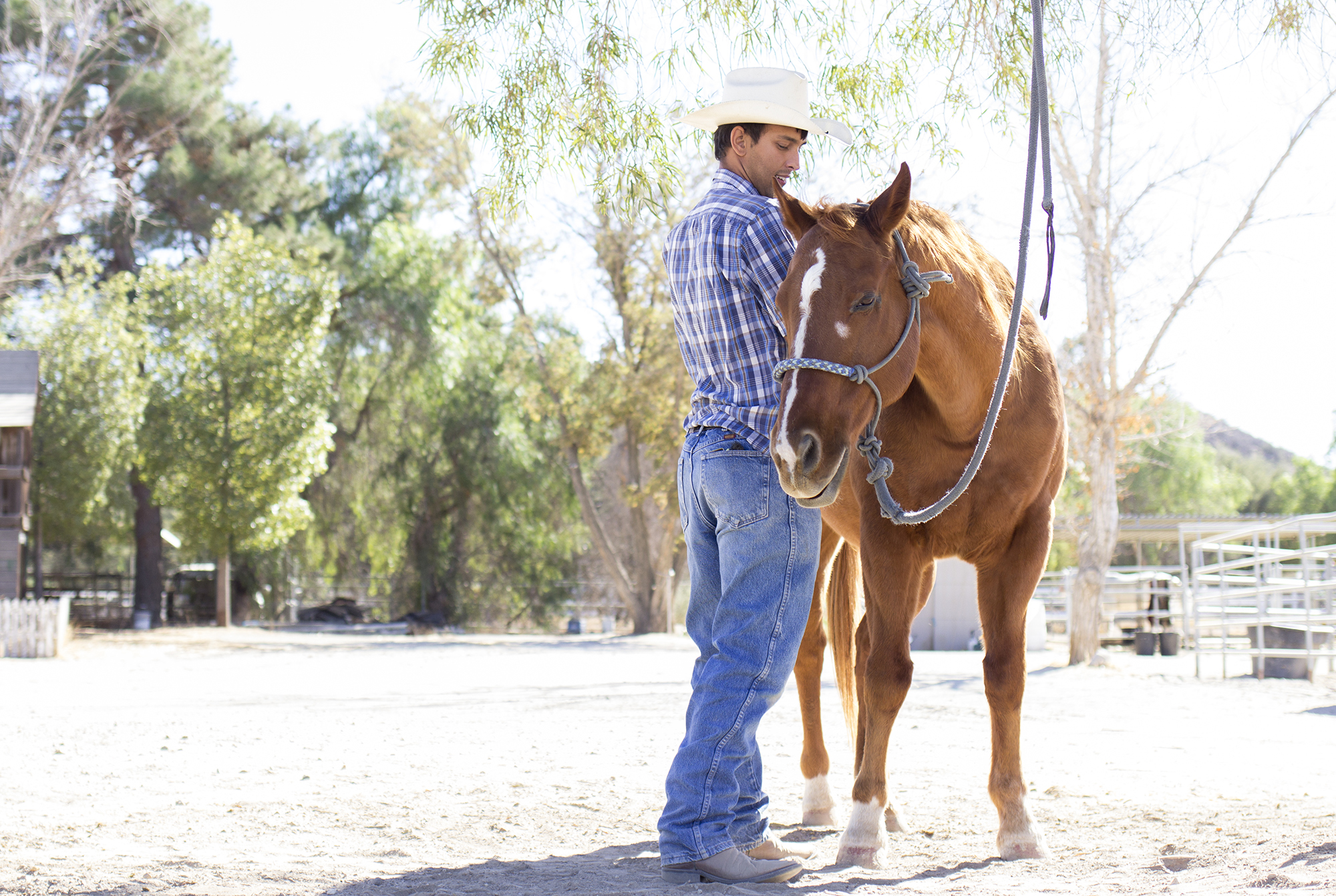 Student works towards helping sick horses
