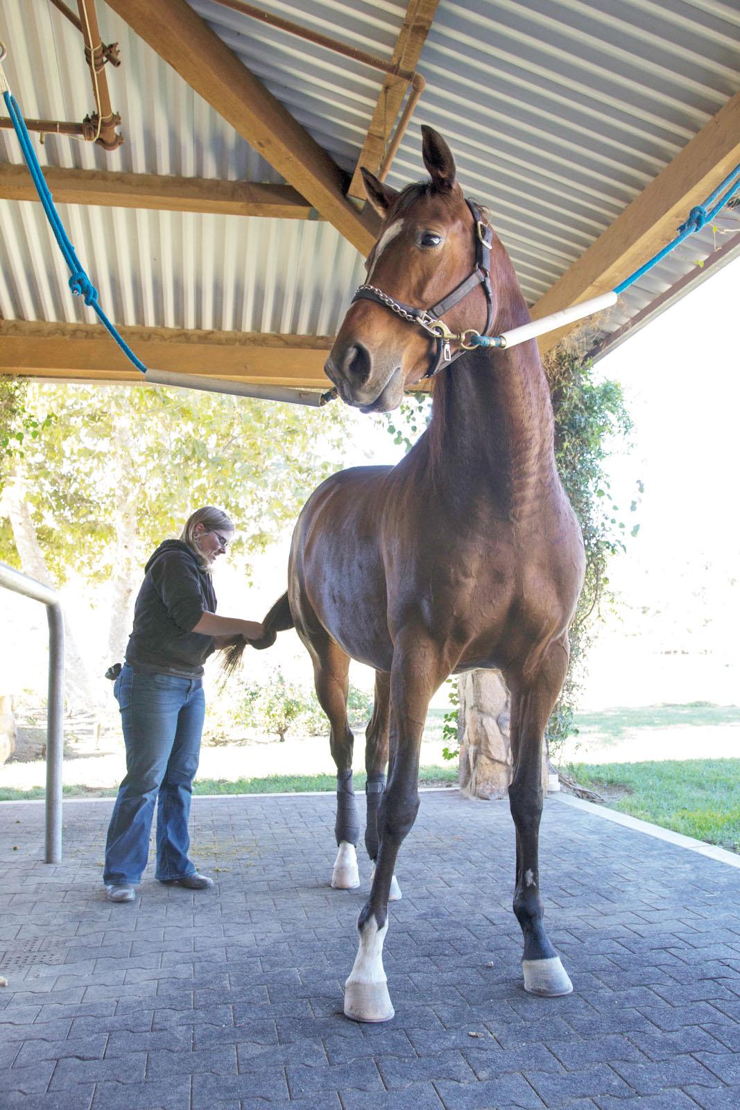 Pierce student helps retired racehorses
