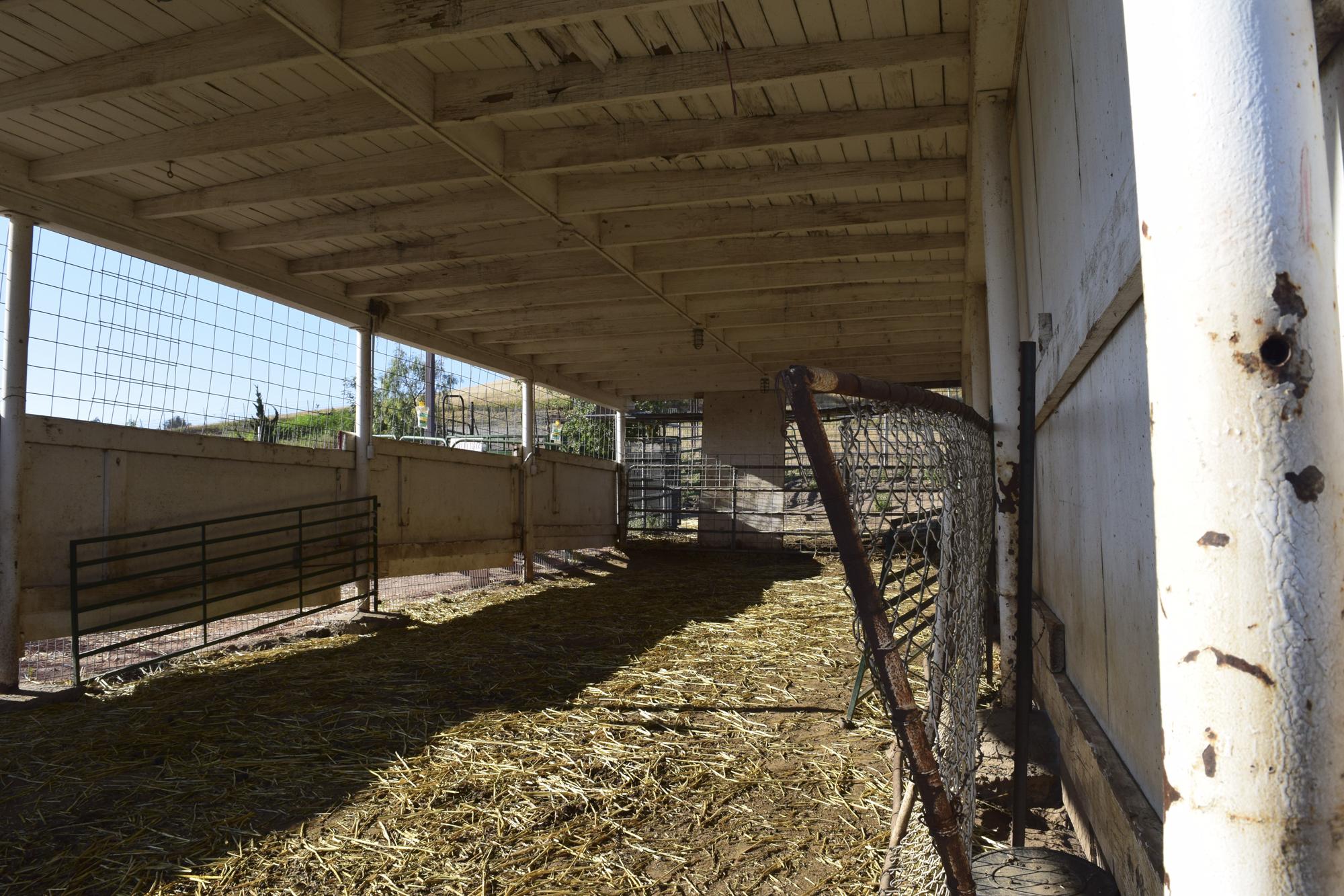 Newborn lamb stolen from barn