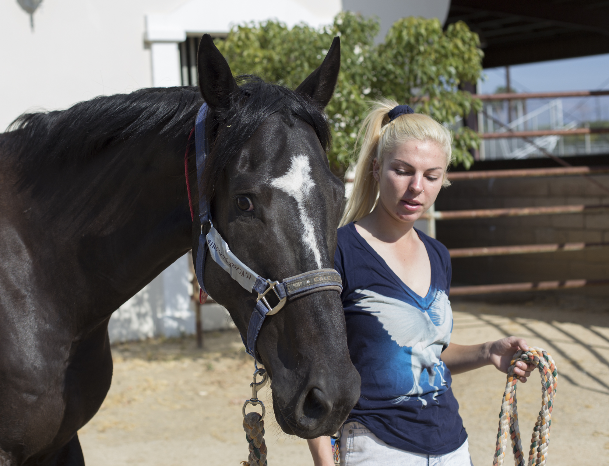 Equestrian Center takes in animals evacuated from brush fire