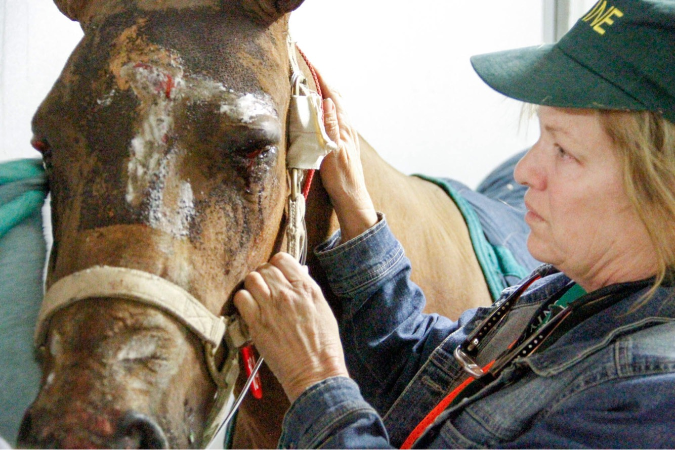 Animal Care and Control overseeing animals at Equestrian Center