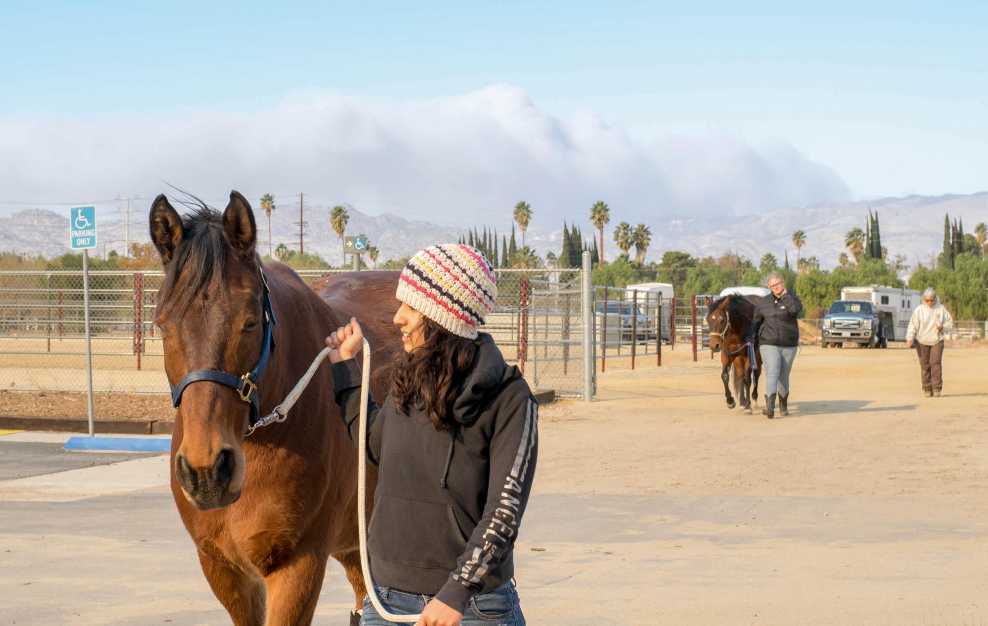 Fire evacuation, animals find stable ground