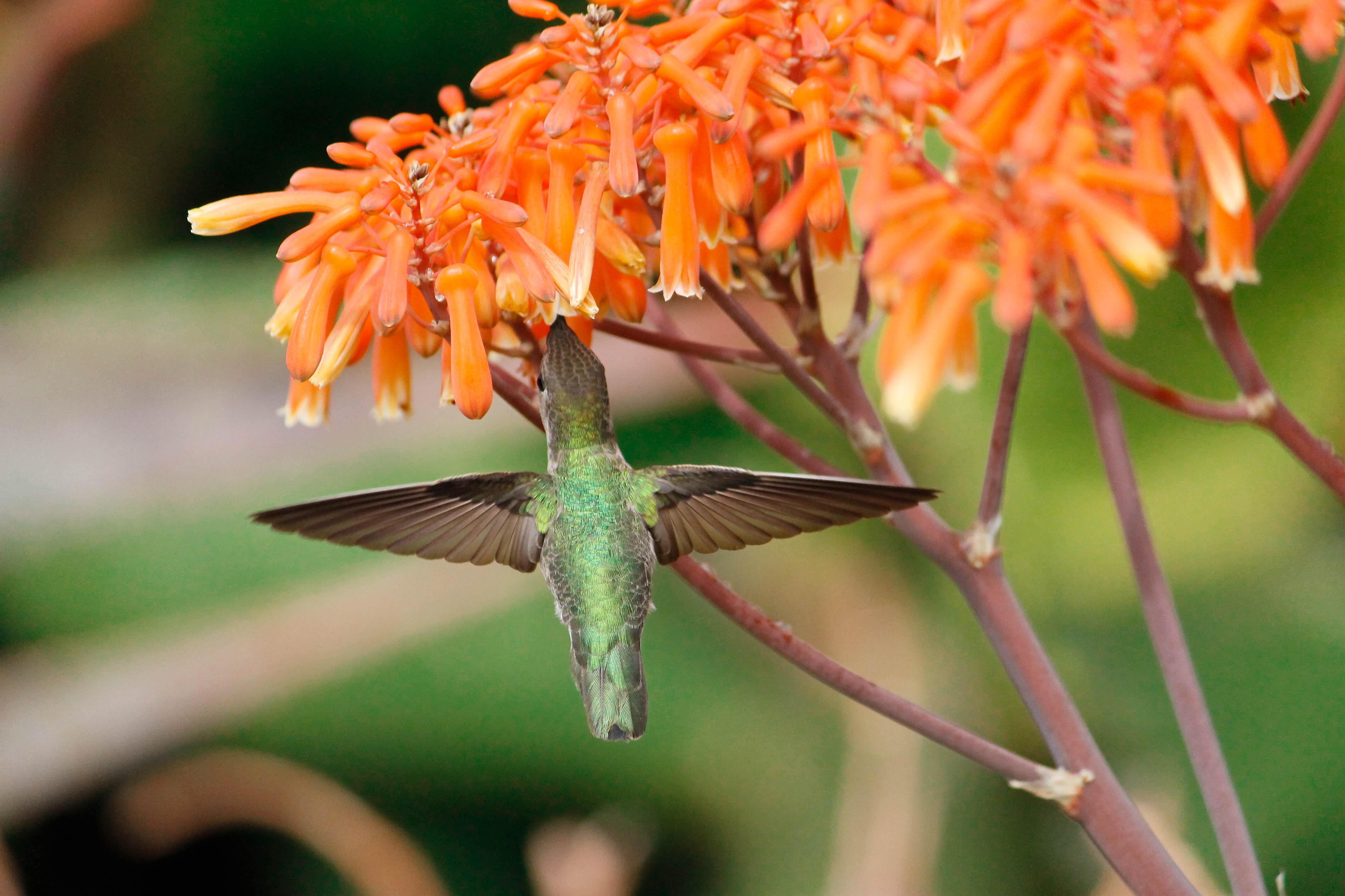 Spring into the Botanical Garden