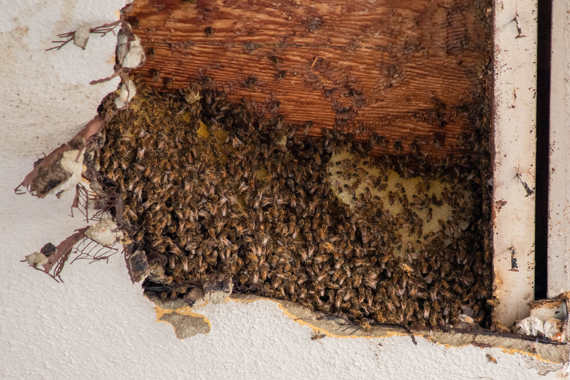 Bees make campus home